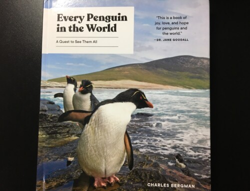 5 Leadership Lessons from Every Penguin in the World