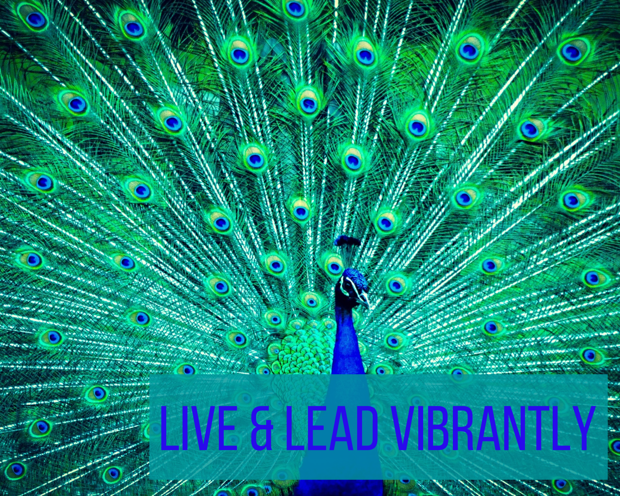 """peacock with the words """"Live & Lead Vibrantly"""""""